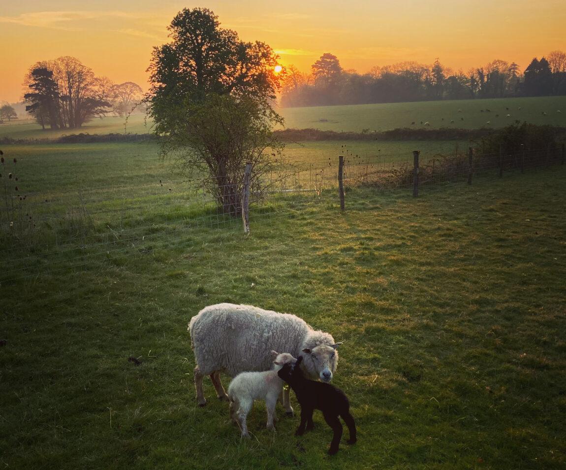 Sunrise over St Columba's Farmstead